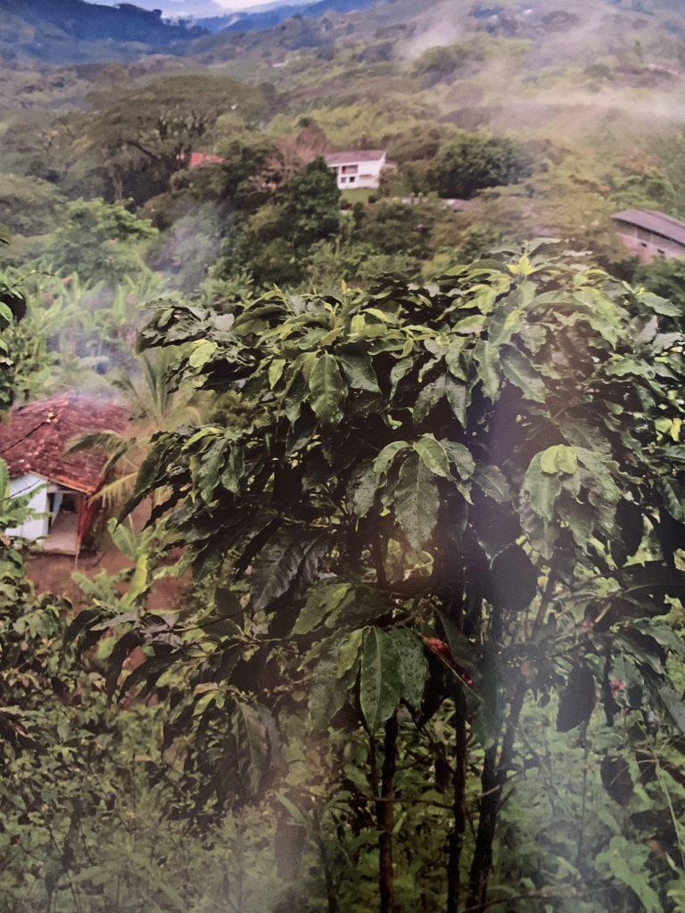 Best Coffee Farms 2021