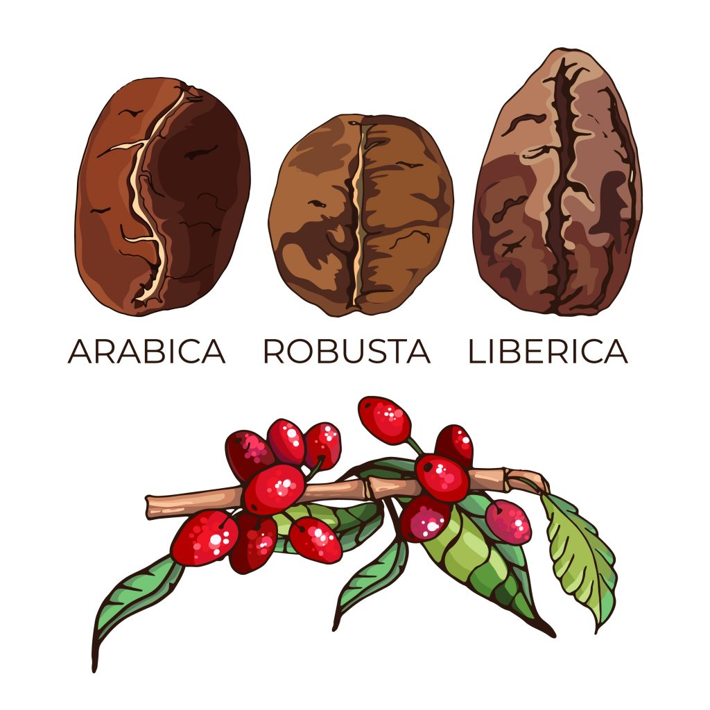 Type of Coffee Beans